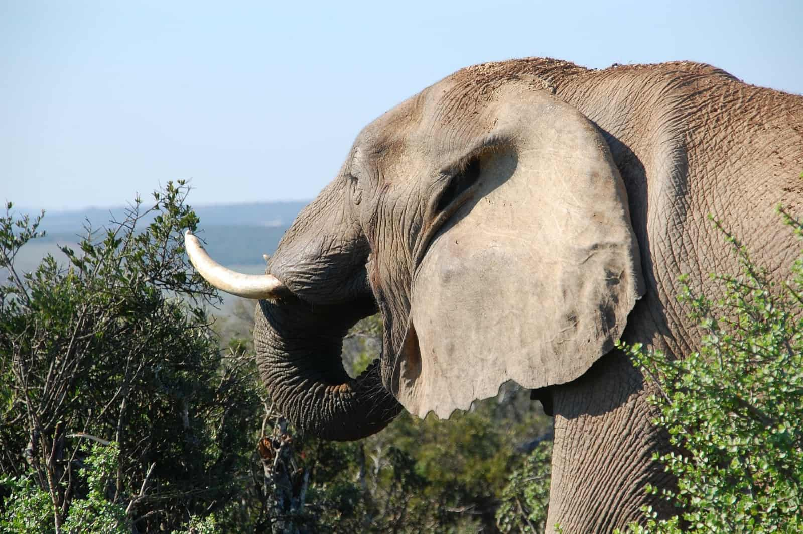 Beehive fences and elephants: Tanzanian case study offers fresh insights