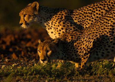 African-Animal-Tracking-Course-2