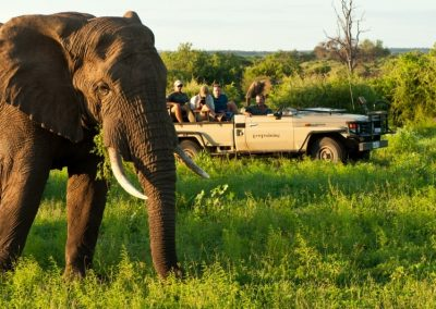 African-Animal-Tracking-Course-4