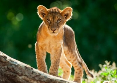 African-Animal-Tracking-Course-5