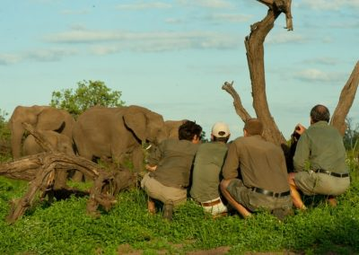 African-Animal-Tracking-Course-8