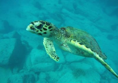 sea-turtle-volunteering