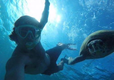sea-turtle-volunteering-seychelles