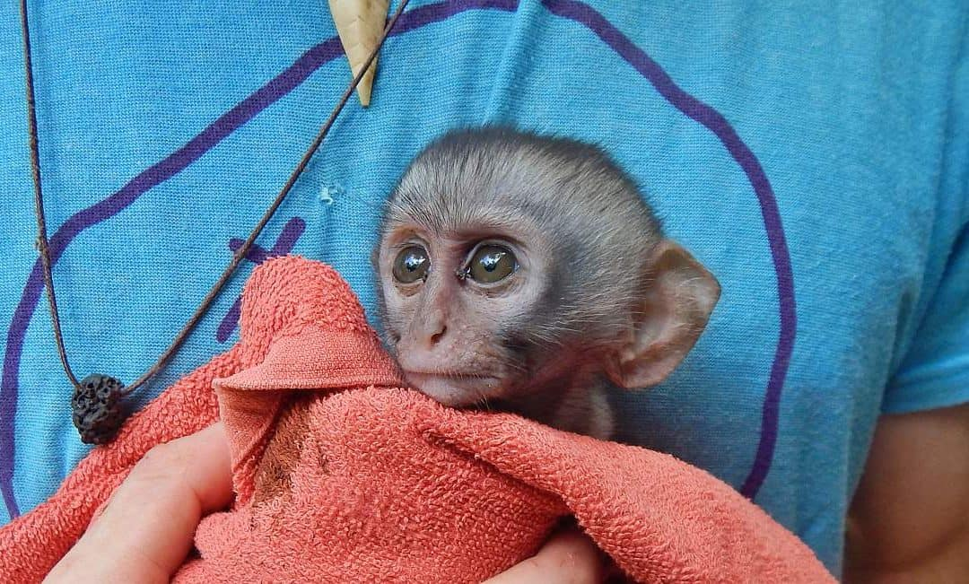 Primate Rescue in a Tropical Beach Paradise