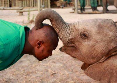 Elephant Orphanage and Community Outreach
