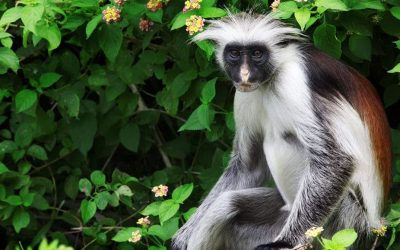 The fate of unique species in Tanzania's coastal forests hangs in the balance