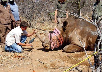 Rhino-vet-volunteer