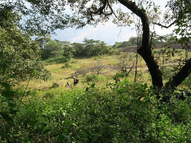 Gorilla Conservation In Deng Deng National Park African