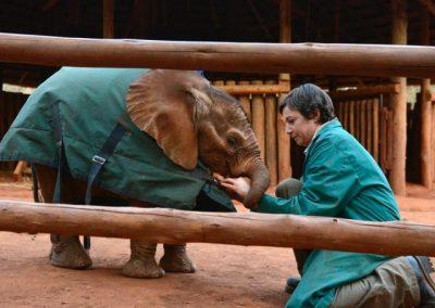 elephant-orphan-volunteer-care