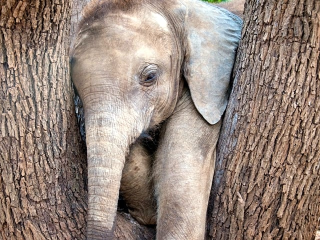 Orphan Elephant Adoption Media Volunteer