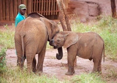 elephant-orphanage-volunteer-project