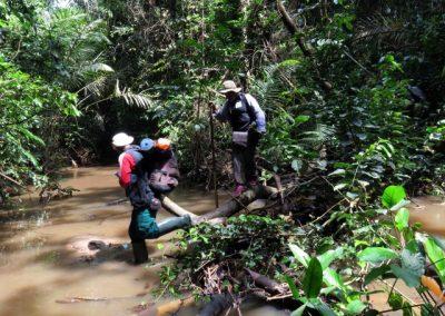 gorilla-survey-crossing-river