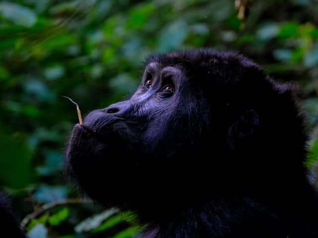 Capacity Building and Education in Mengame Gorilla Sanctuary