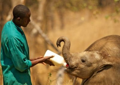 zambia-elephant-orphanage-10