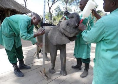 zambia-elephant-orphanage-11