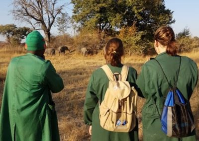 zambia-elephant-orphanage-3
