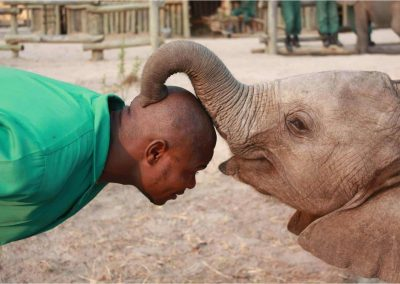 zambia-elephant-orphanage-8
