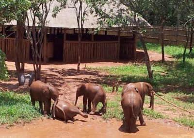 zambia-elephant-orphanage-9