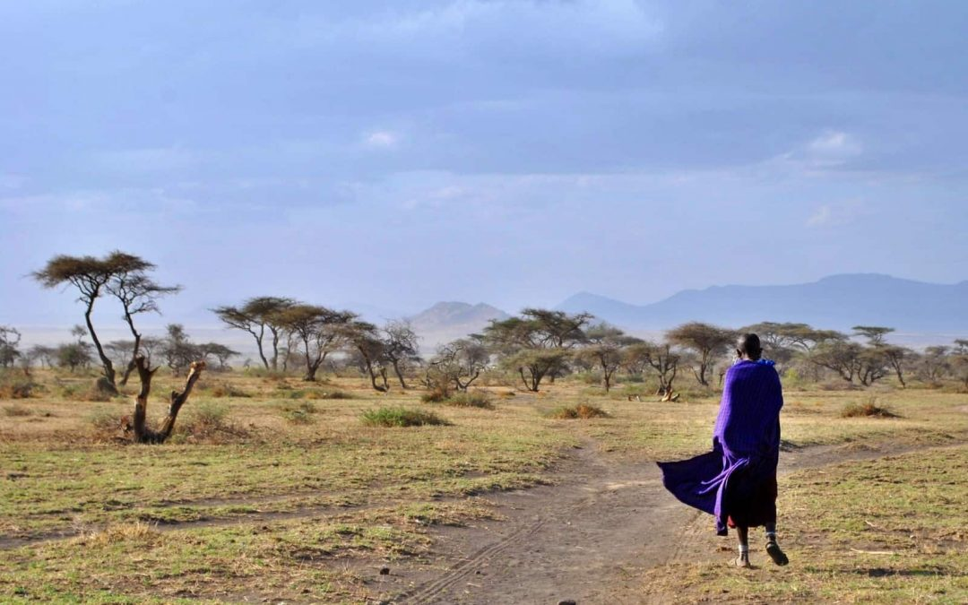 Roads make development and conservation clash in the Serengeti