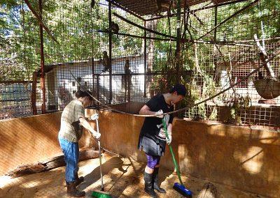 volunteer-cleaning-animal-enclosures