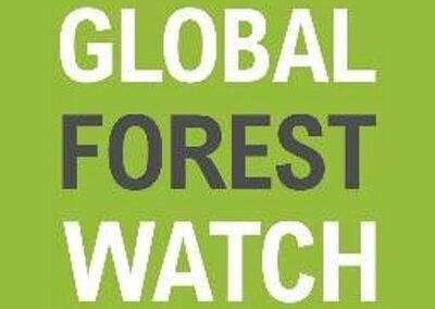 global-forest-watch