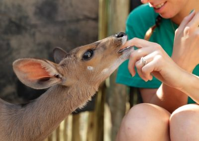 Working with wildlife and underpriviledged children 5