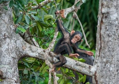 7-Days Tree Planting and Great Apes Conservation Safari in Uganda