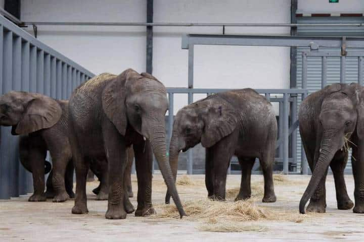 Pressure Mounts on Governments to Stop Baby Elephant Imports