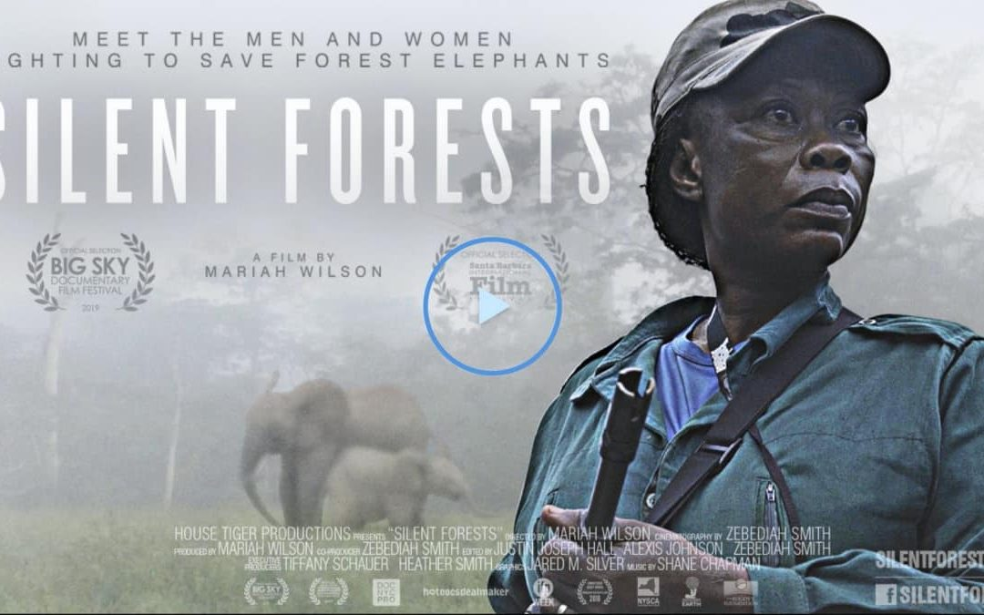 Silent Forests: A rare glimpse inside the forest elephant poaching crisis