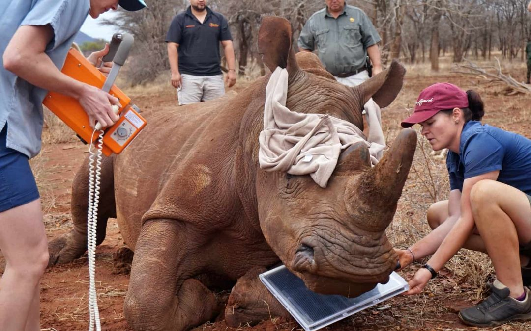 Veterinary training and wildlife conservation programme