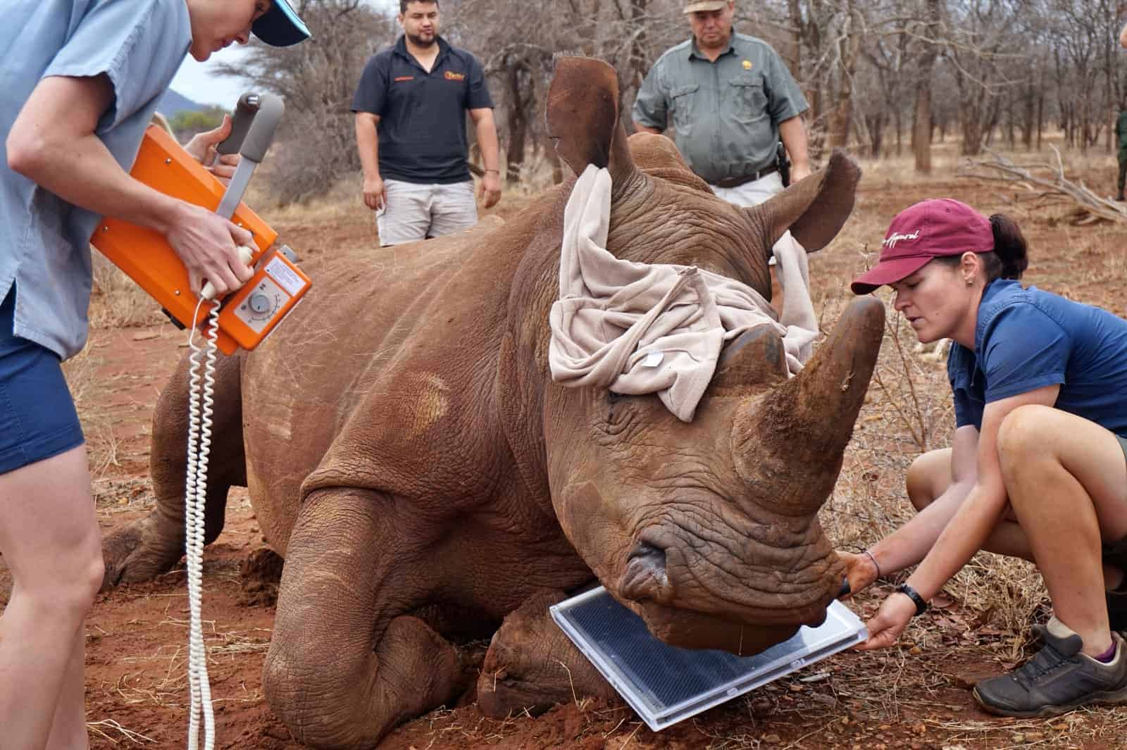 Veterinary training and wildlife conservation