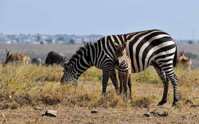South Africa wants to promote wildlife consumption