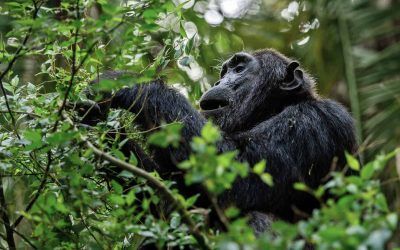 Cameroon government cancels logging concession that threatens wildlife in virgin rainforest