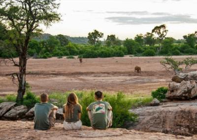 online wildlife course