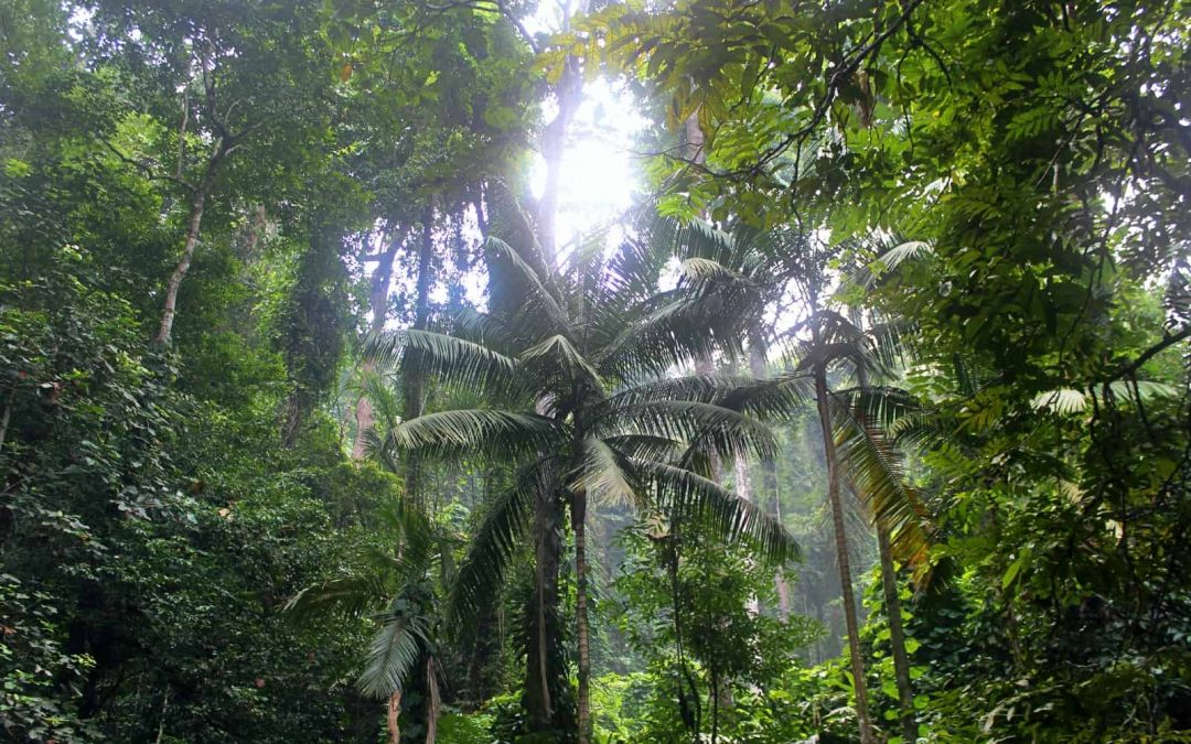 African tropical mountain forests store far more carbon than previously thought – new research